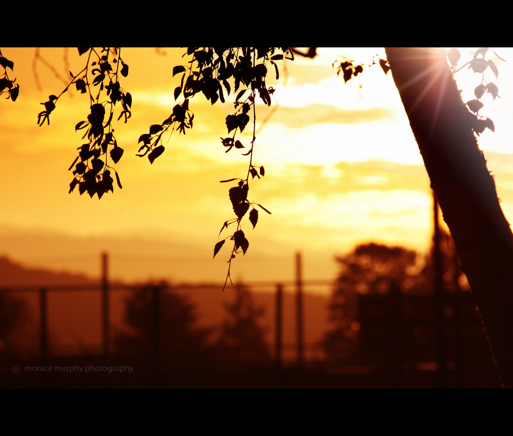 Photograph sunset flare by Monica Murphy on 500px
