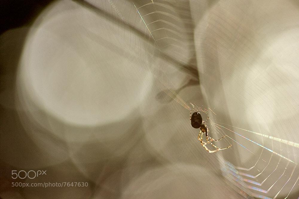 Photograph A spider's awakening by Péter Koczkás on 500px