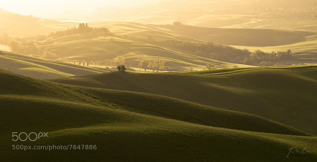 Photograph Golden green by Csaba Tökölyi on 500px