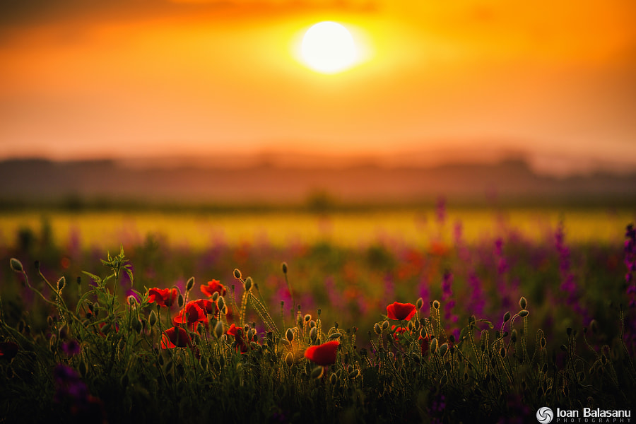 silence of the colors by Ioan Balasanu on 500px