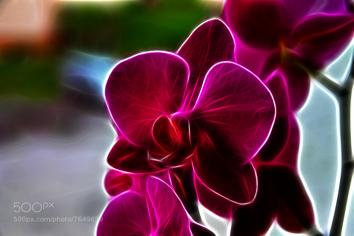 Photograph Orchid by Rausch Wilhelm Robert on 500px