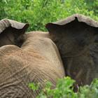 Manyara park, Tanzania
