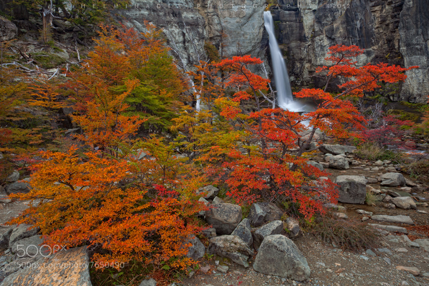 Photograph Autumn in Patagonia by Helminadia Ranford on 500px