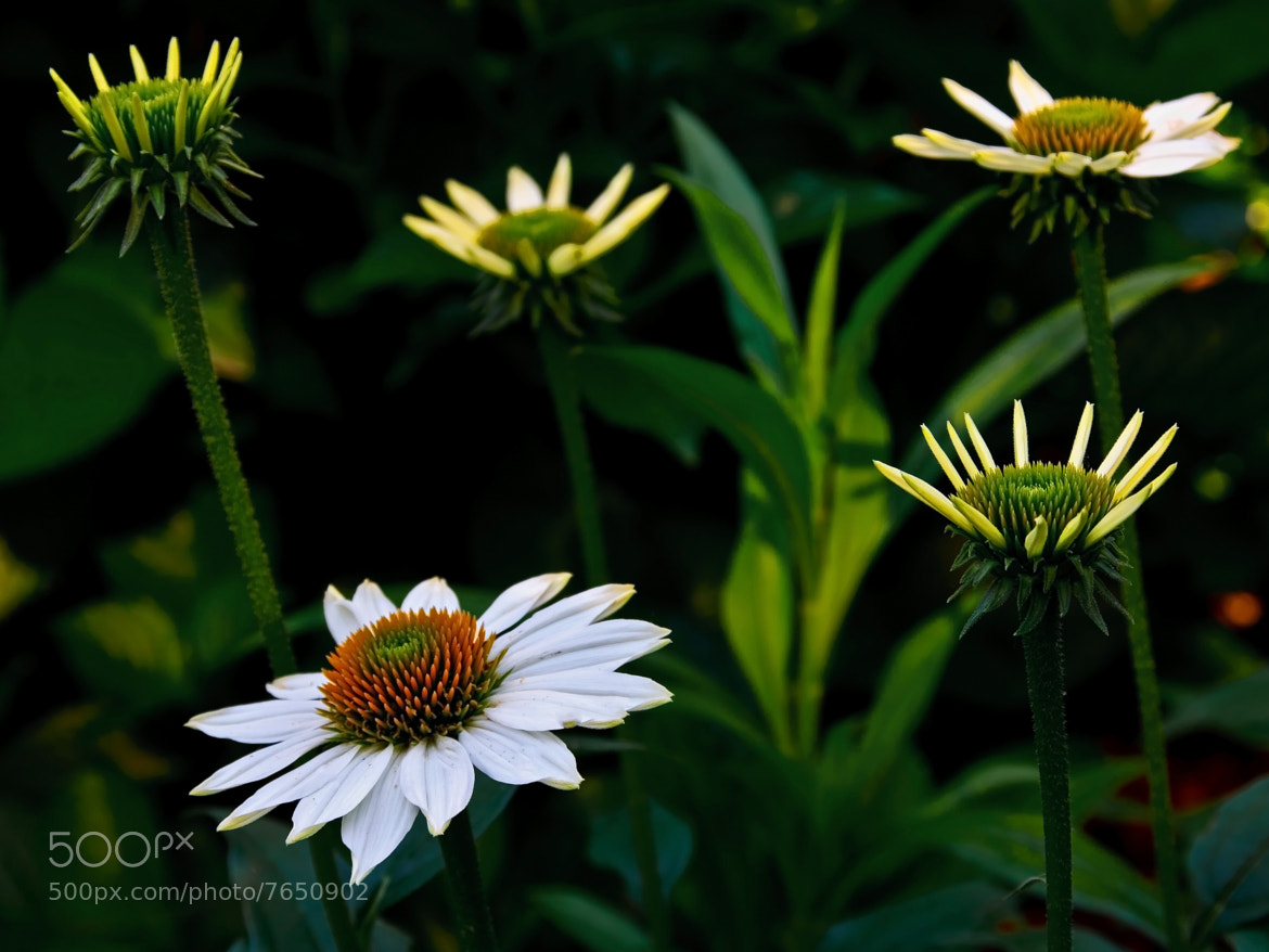 Photograph Summer Dreams by Jerry Bain on 500px