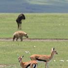 Ngorongoro Park, Tanzania
