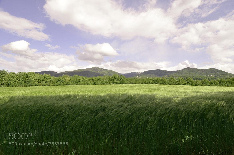 Photograph corn field by Franziska Weber on 500px