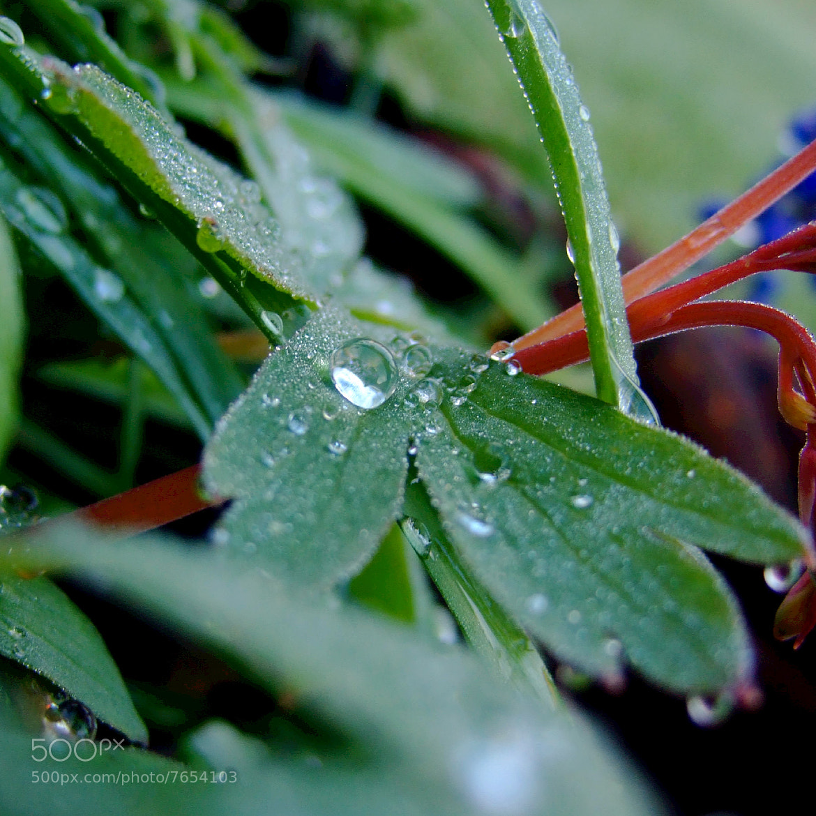 Photograph Droplets by Adhib M on 500px