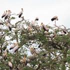Manyara, Tanzania