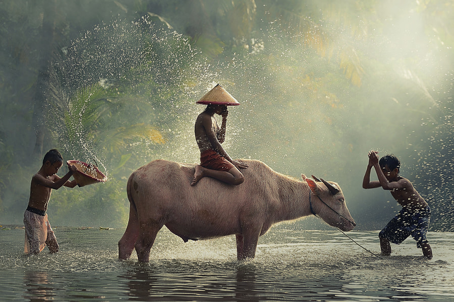 Water Buffalo...1st Anniversary by Vichaya Pop on 500px.com