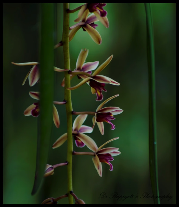 Photograph orchid.... by Rup Jyoti on 500px