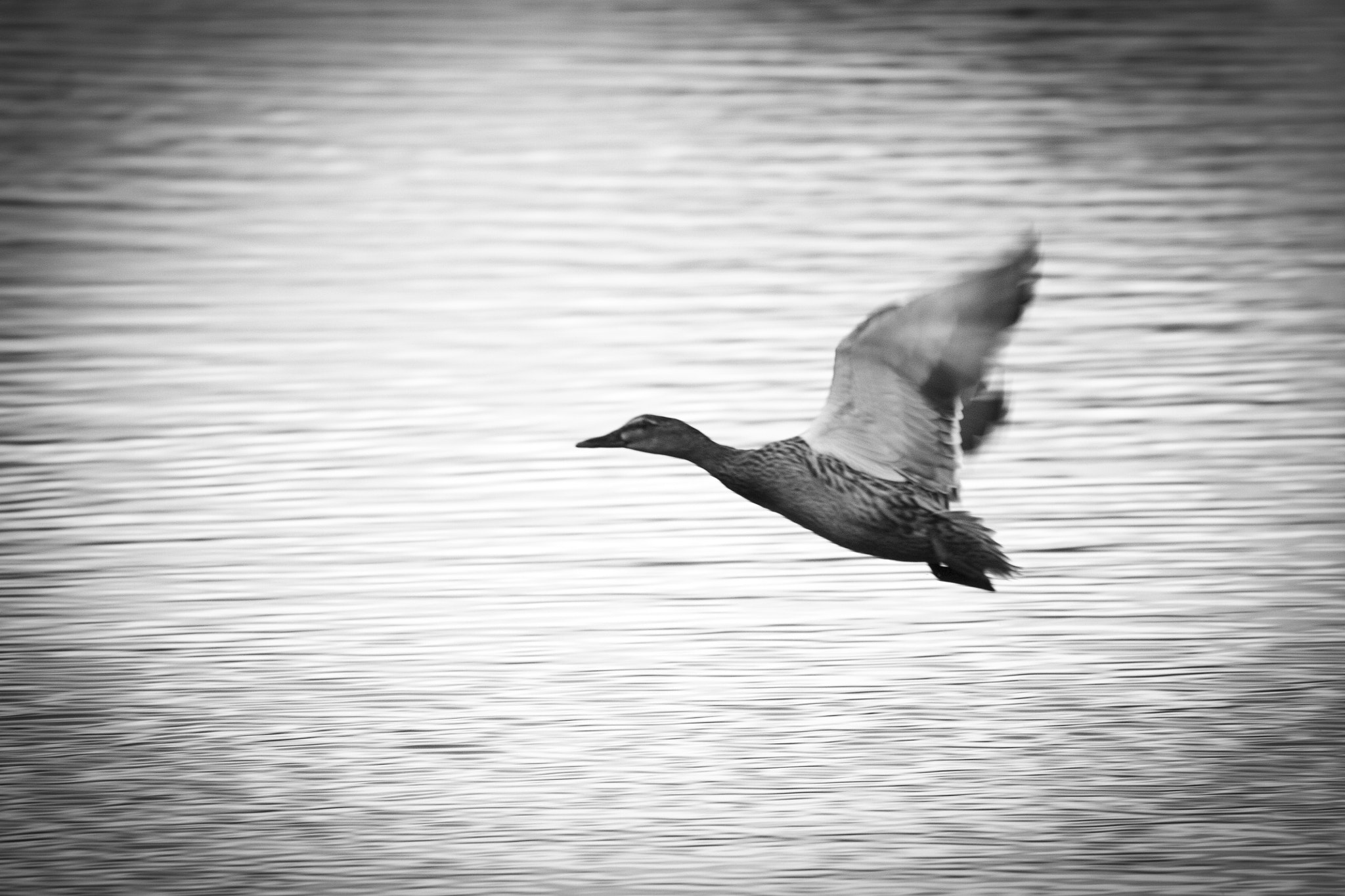 Photograph In Flight by Oisin Conolly on 500px