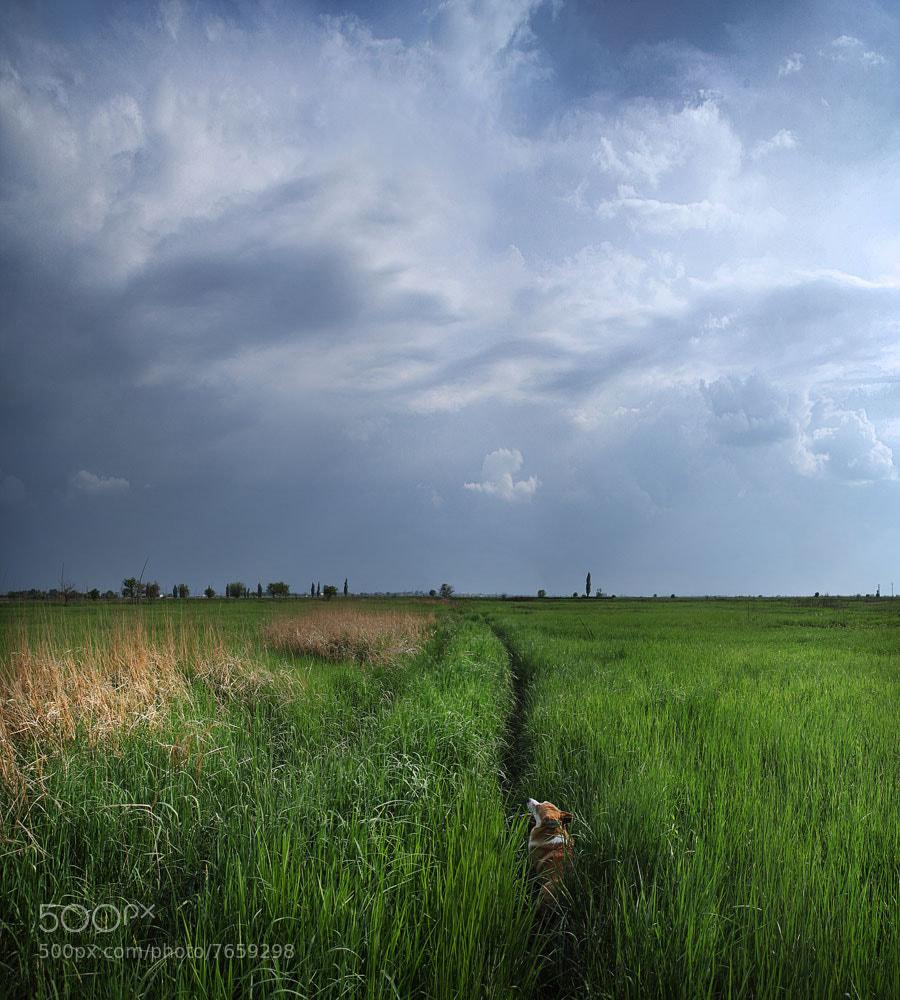 Photograph в высокой траве by Лия Васильева on 500px