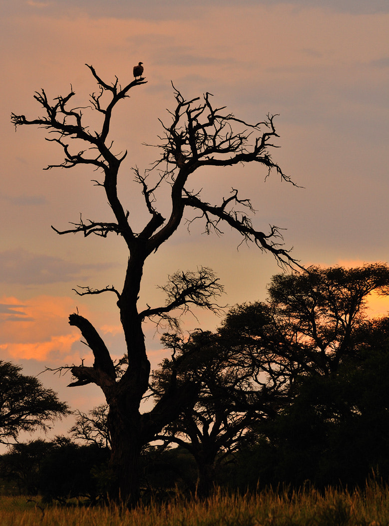 Photograph Sunset Vulture by Dick Whitlock on 500px