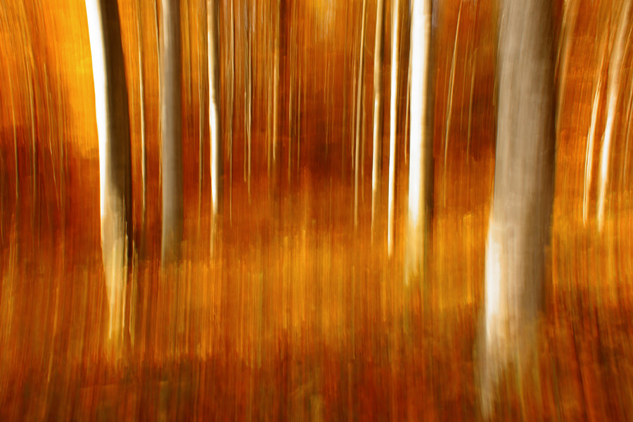 Photograph Depth of forests by Janez Tolar on 500px