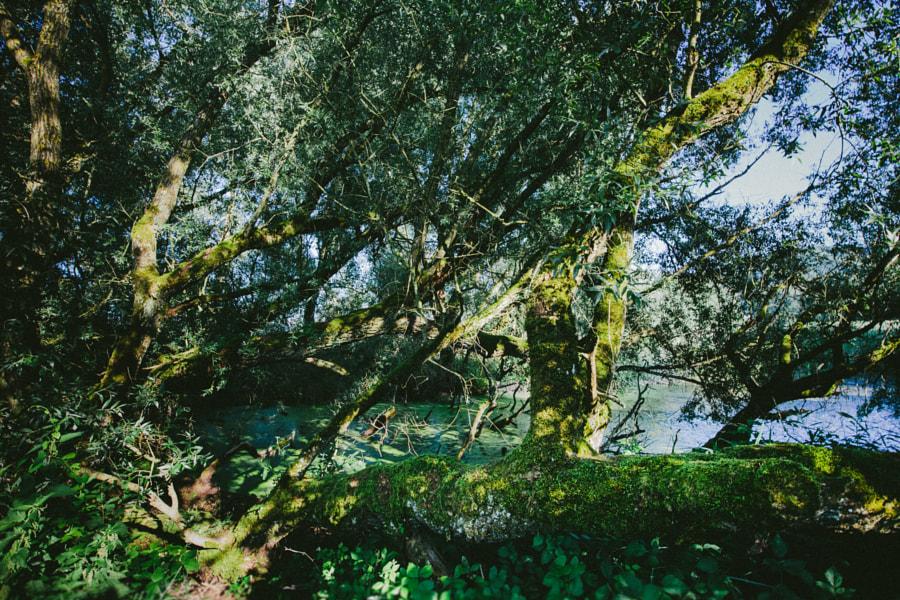 Trees III