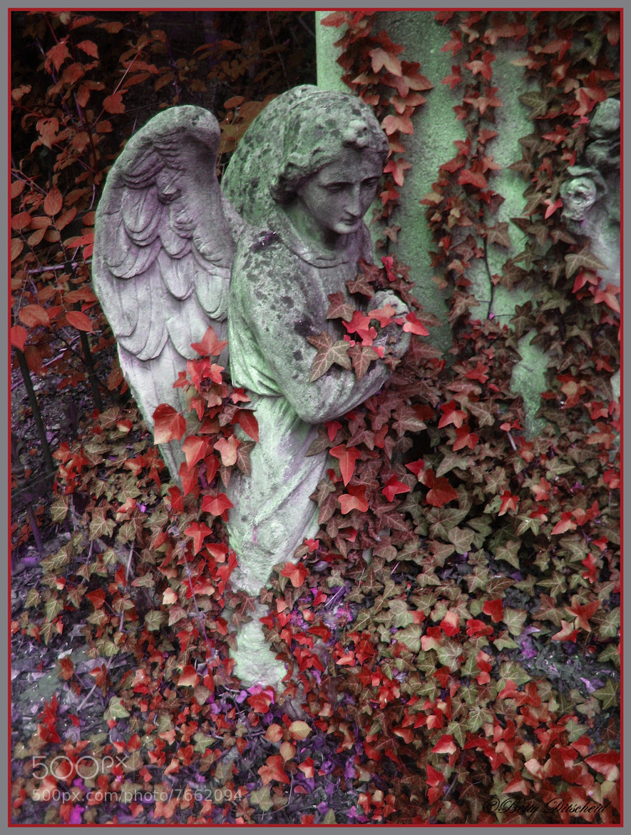Photograph St. Marx Cemetery Series Vienna 1/12 by Betty Ditscheid on 500px
