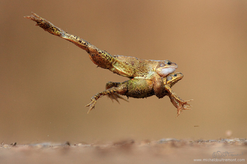 Photograph Jumping by Michel d'Oultremont on 500px