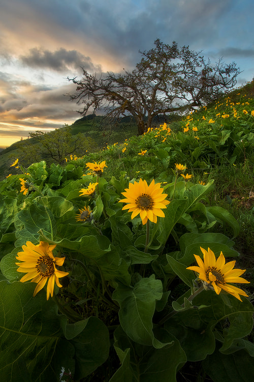 Photograph Flower Power by David Thompson on 500px