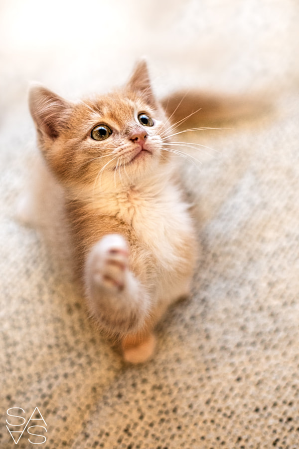 little cat by Sabine Sailer on 500px