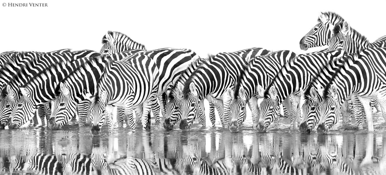Photograph Line-up by Hendri Venter on 500px