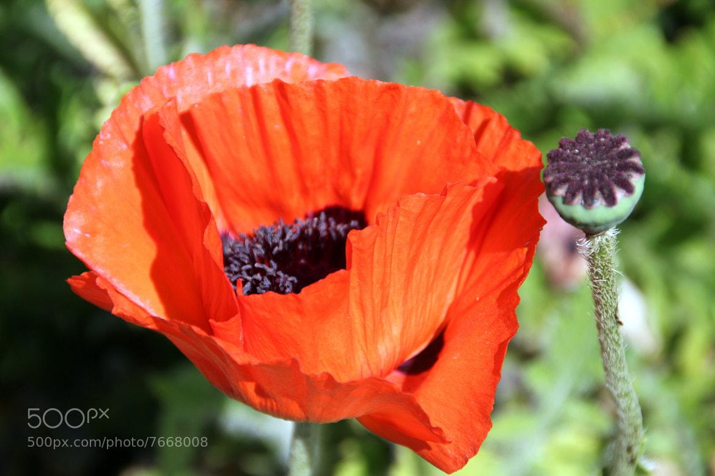 Photograph Flowers by Boris Sankisov on 500px