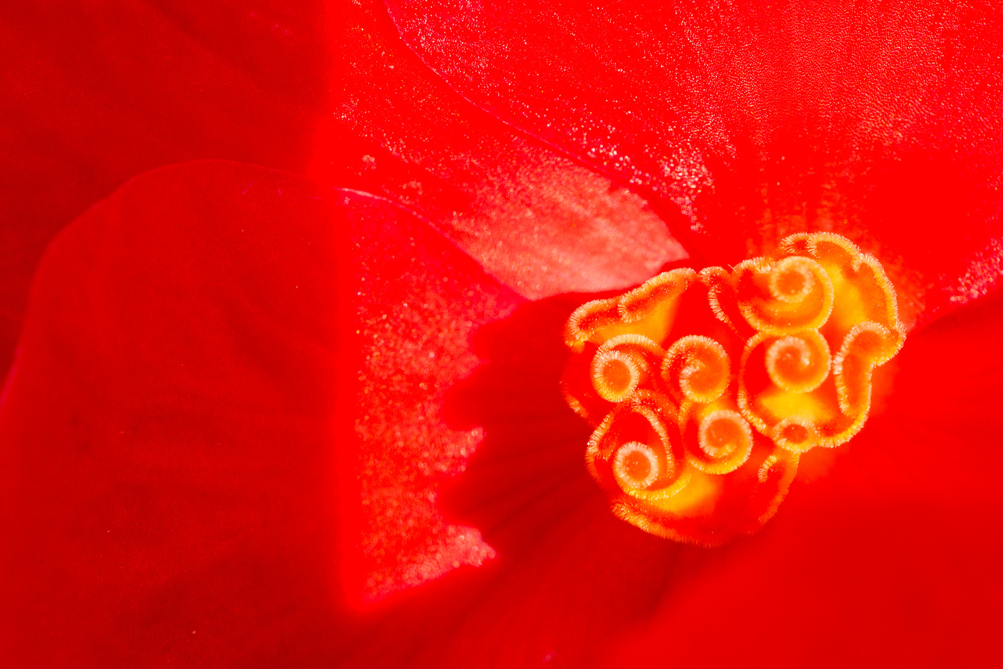 Photograph Red by Joseph Calev on 500px