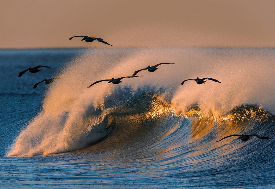 Pelican Flock  73A2308 by David Orias on 500px.com