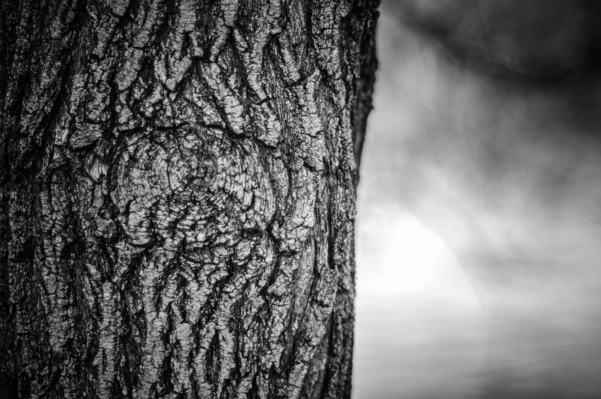 Photograph The eye in the tree by Miroslav Skorykh on 500px