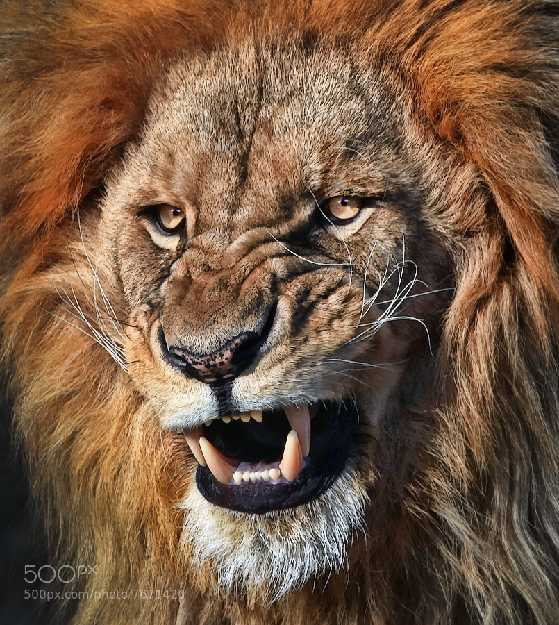 Photograph Still angry by Klaus Wiese on 500px