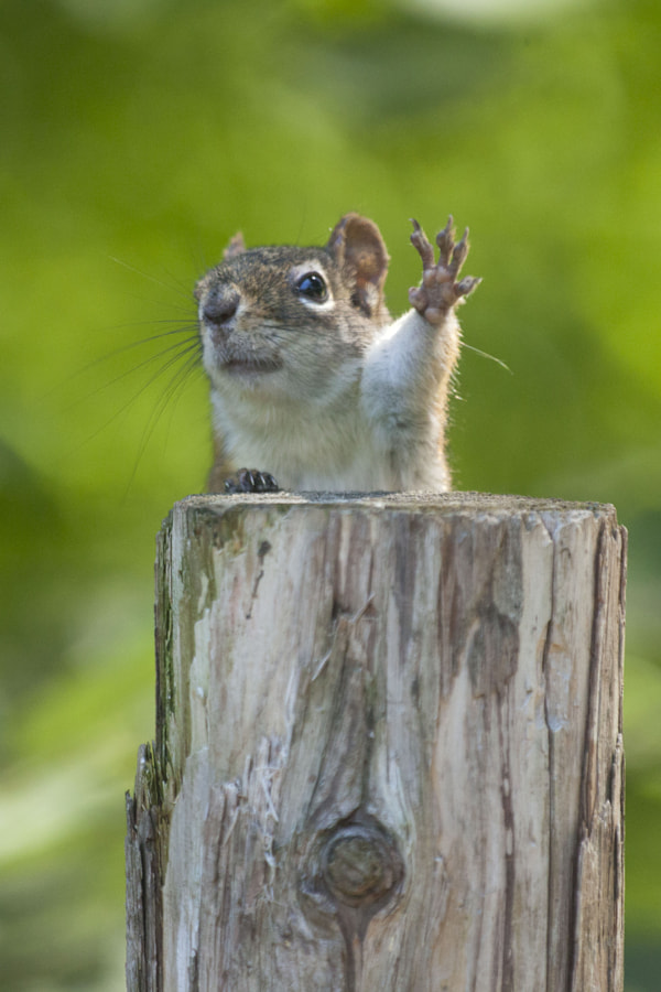 Photograph The high five by Andre Villeneuve on 500px