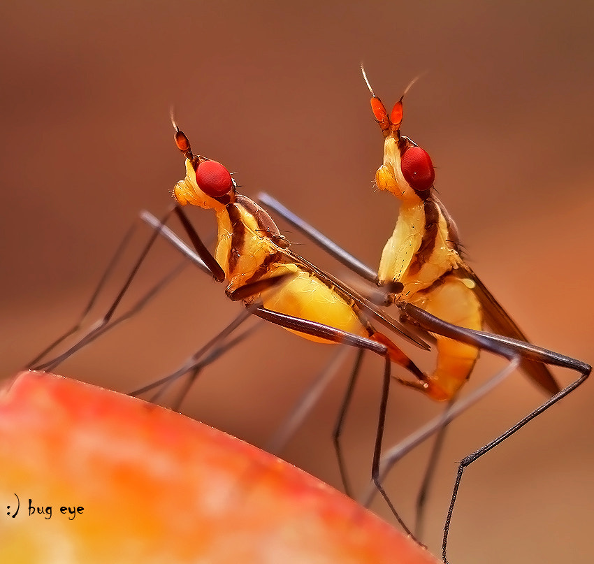 Photograph season of love by bug eye :) on 500px