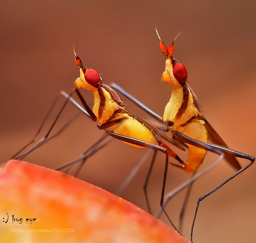 Photograph season of love by bug eye :) on 500px