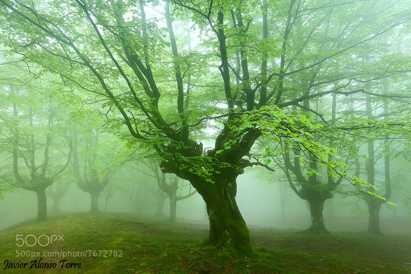 Photograph green mist by Javier Alonso Torre on 500px