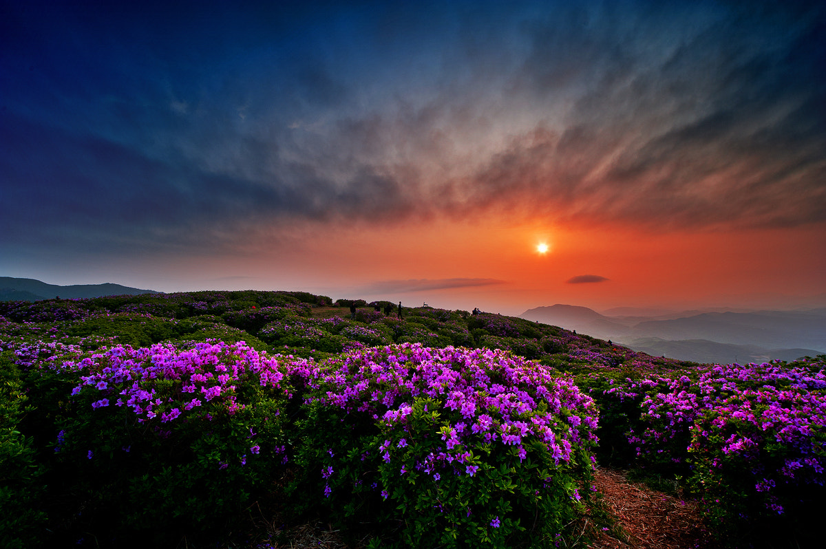 Photograph Morning with flower by YoungHwan Kim on 500px