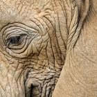Elephant, Manyara Park, tanzania