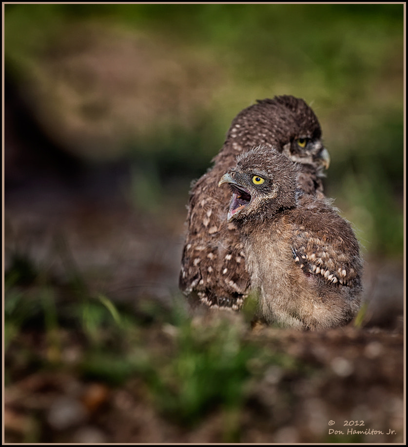 Photograph My Brother Stole Mt Worm by Don  Hamilton Jr. on 500px