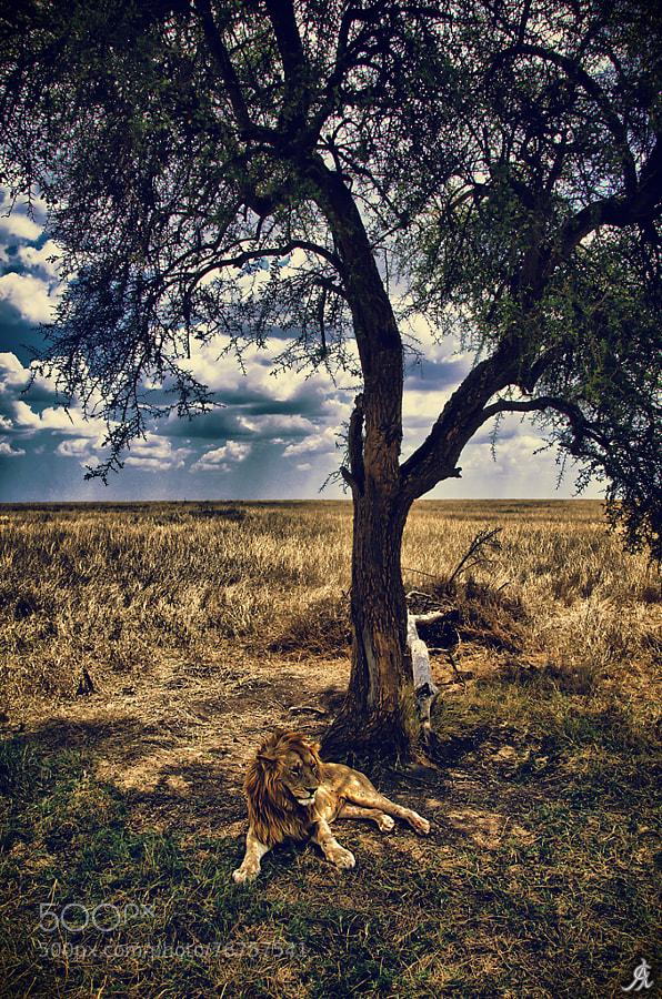 """<a href=""""http://www.alegiorgiartphoto.com"""">www.alegiorgiartphoto.com</a> <a href=""""https://www.facebook.com/alesgiorgi.artphotography"""">Become fan on FACEBOOK</a> <a href=""""https://twitter.com/AleGiorgi74"""">Follow me on TWITTER</a>"""