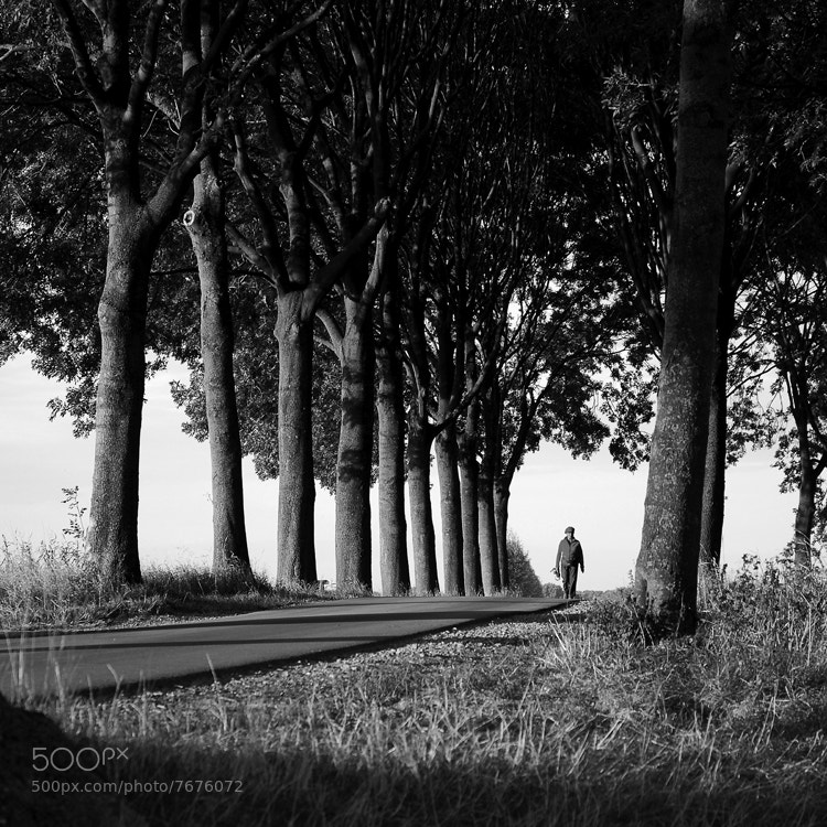 Just outside of Nijmegen (the Netherlands) this women was walking her dog at the end of the afternoon. The low sun gave some cool effects in the trees.