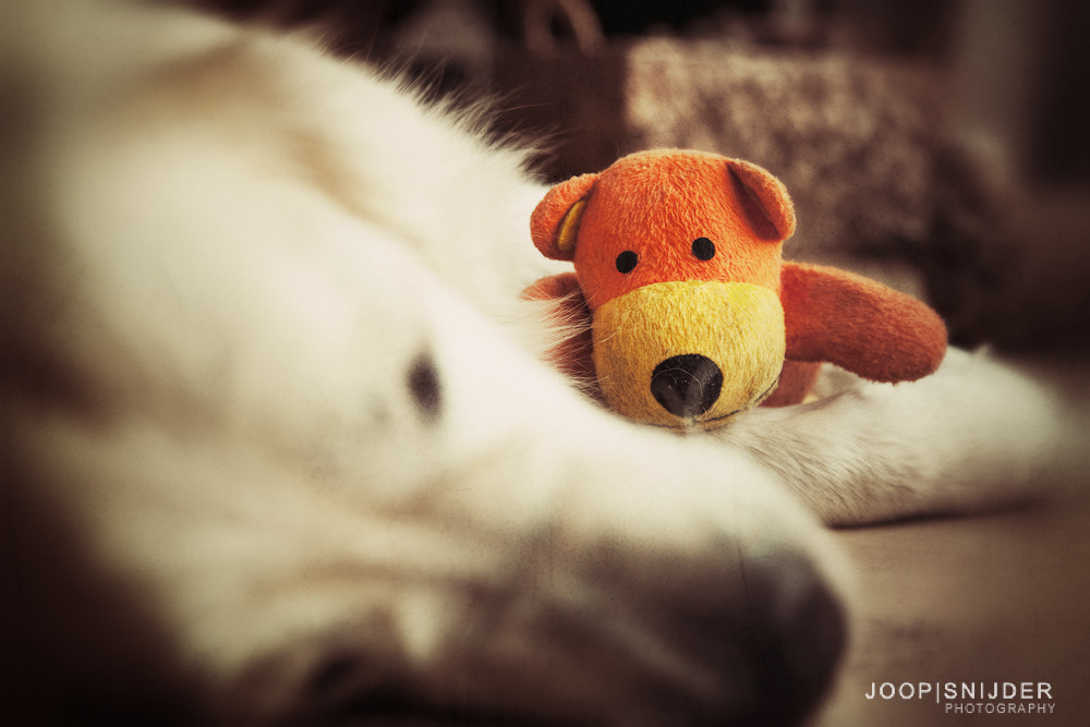 Photograph Pet Toy by Joop Snijder on 500px