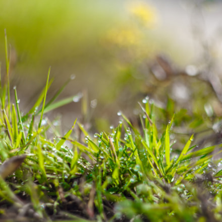 .grass.