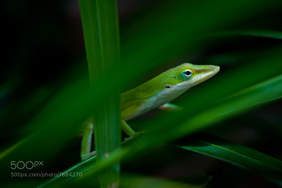 Photograph green on black by Carlos Canales on 500px