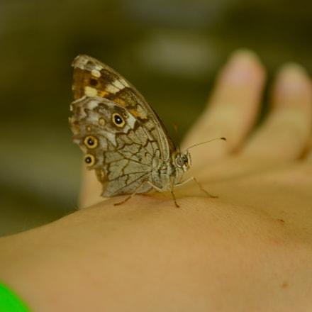 Friendly butterfly