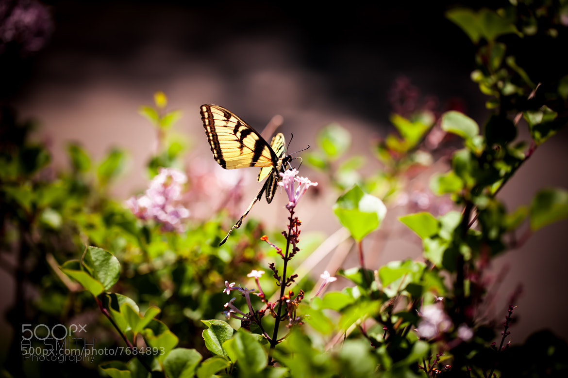 Photograph Butterfly by Drew Smith on 500px