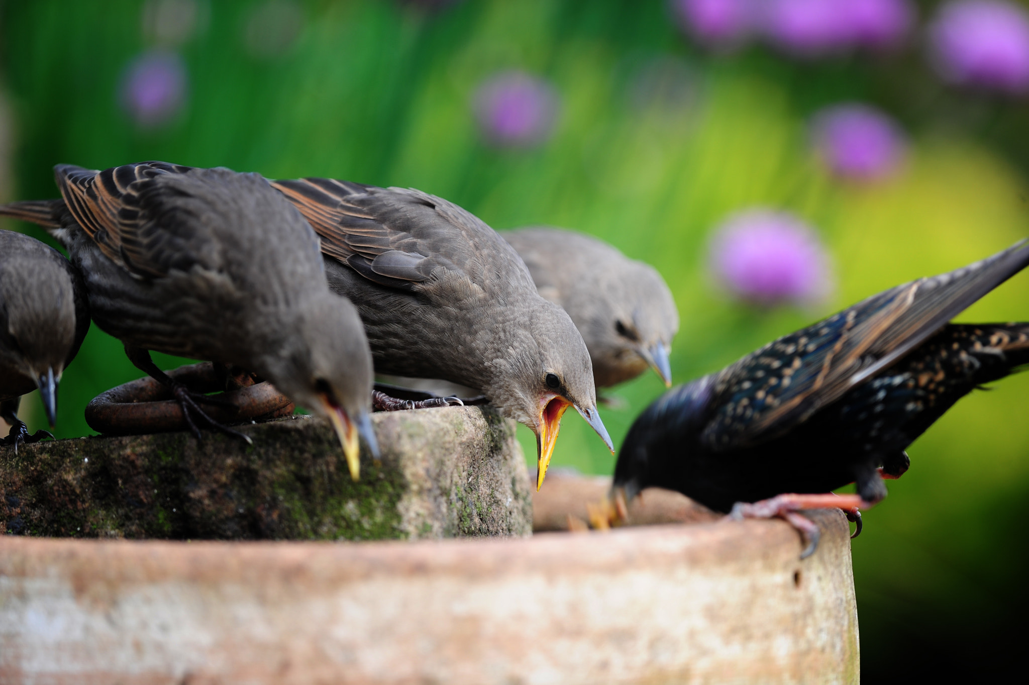 Photograph Starlings Supper by Villager Jim on 500px