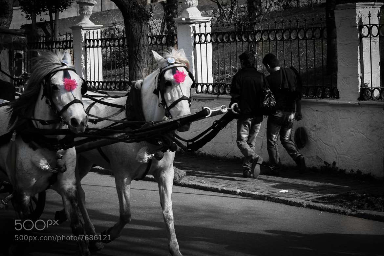 Photograph Phaeton by Omer  Uzun on 500px