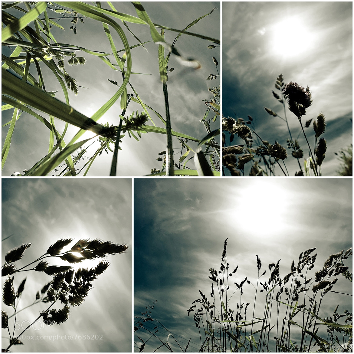 Photograph Grasses by Harry Keller on 500px