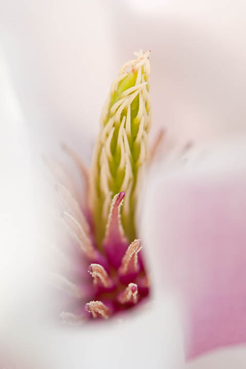 Photograph Magnolia Detail by Peter Fuentes on 500px