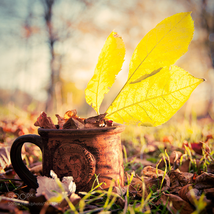 Photograph autumn cup by Ljudmila Vasina on 500px