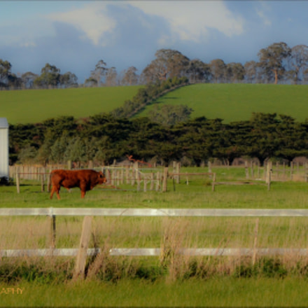Whittlesea,Victoria