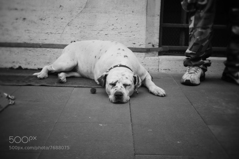 Photograph Dog by Rebecca Petetti on 500px